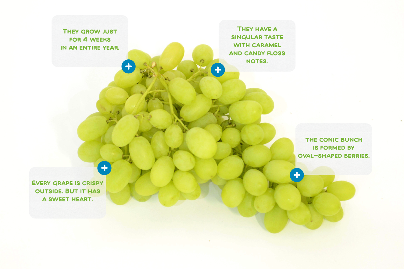 Discover Cotton Candy Grapes
